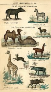 animals-modern-hebrew